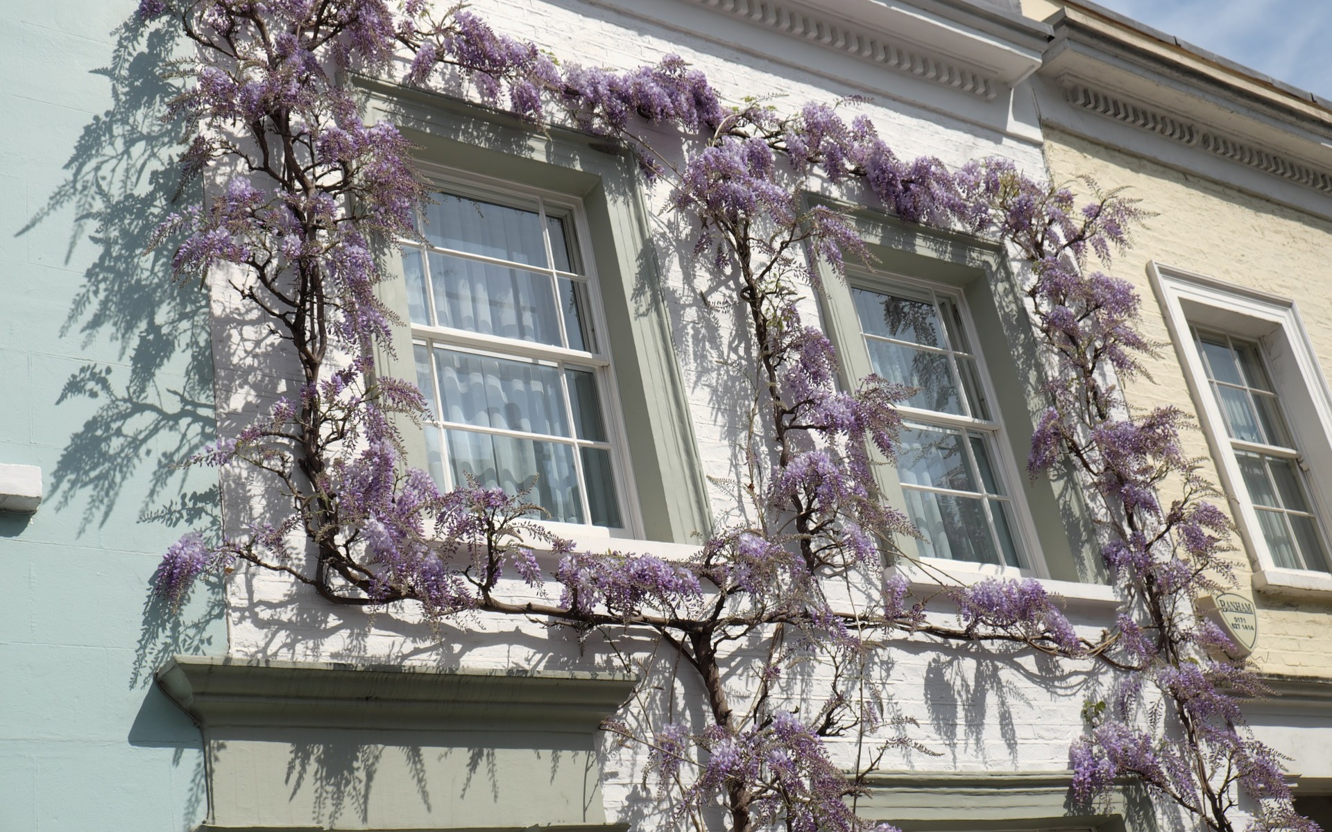 Wisteria blooming around a house window
