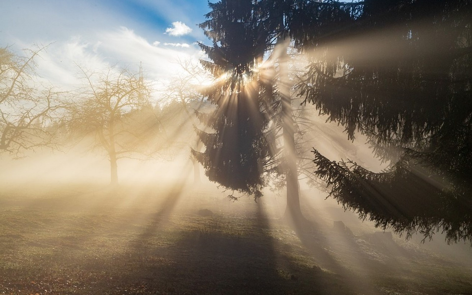 Winter sunlight filtering through trees in a London park